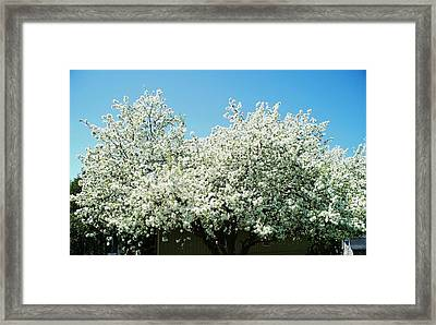 Fleeting Moments Framed Print