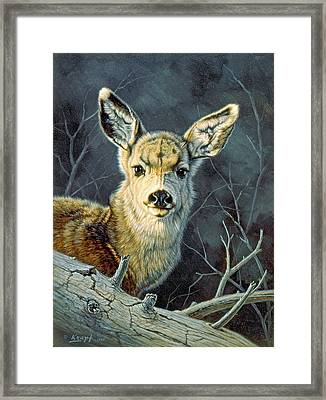 Fleeting Visit- Fawn Framed Print by Paul Krapf