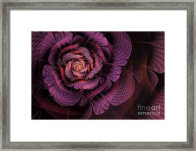 Fleur Pourpre Framed Print by John Edwards