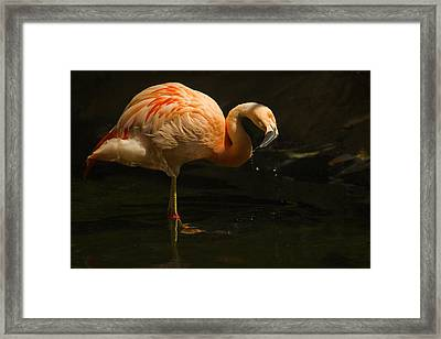 Flick Framed Print