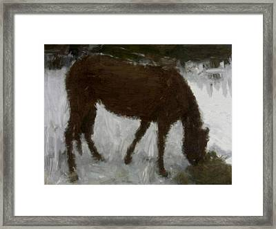 Framed Print featuring the painting Flicka by Bruce Nutting