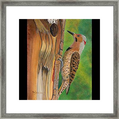 Flicker Framed Print by Amy Reisland-Speer