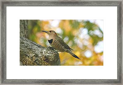 Flicker Framed Print by Debbie Sikes