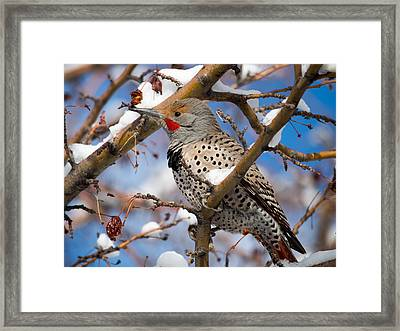 Flicker In Snow Framed Print