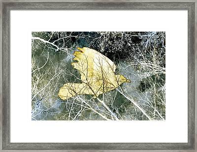 Flight Framed Print by Ann Powell