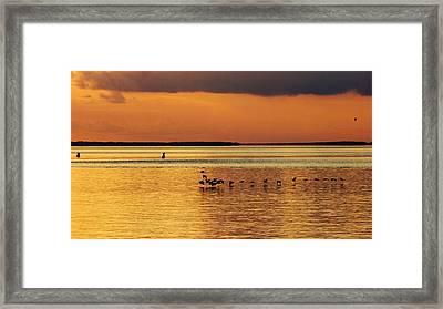 Flight At Sunset Framed Print