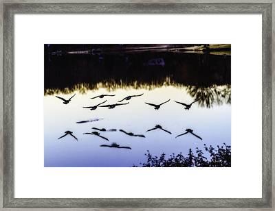 Flight Framed Print by Barry Jones
