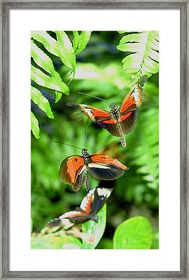 Flight Framed Print by  George Griffiths