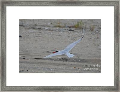 Framed Print featuring the photograph Flight by James Petersen