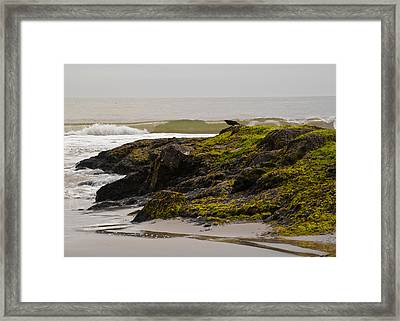 Flight Jitters Framed Print