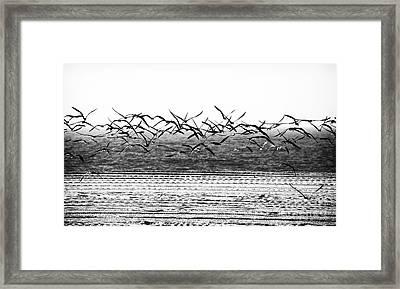 Flight Framed Print by John Rizzuto