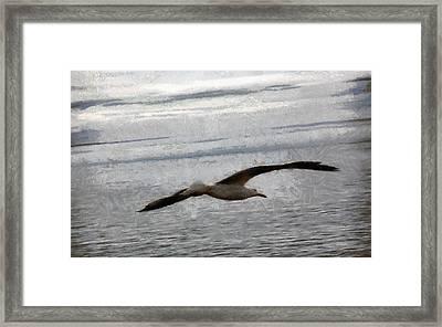 Flight Of A Seagull Framed Print by Georgi Dimitrov
