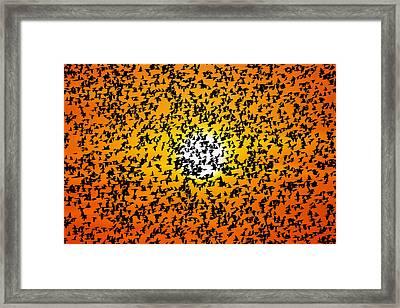 Flight Of Birds At Sunset Framed Print