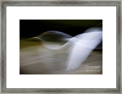 Framed Print featuring the photograph Flight Of Fancy by Anne Rodkin