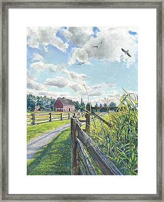 Flight Of Seagulls Framed Print