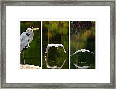 Flight Of The Crane Framed Print by Davina Washington