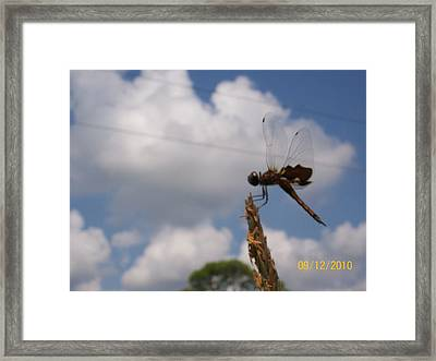 Framed Print featuring the photograph Flight Of The Dragonfly by Belinda Lee