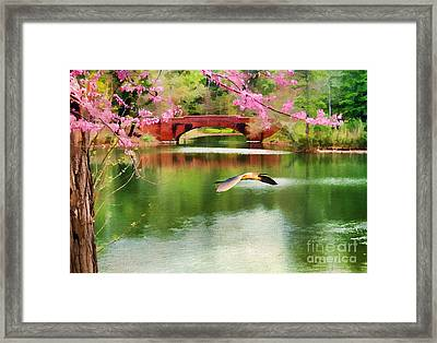 Flight Of The Egret Framed Print by Darren Fisher