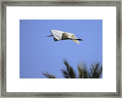 Framed Print featuring the photograph Flight Of The Egret by Penny Meyers