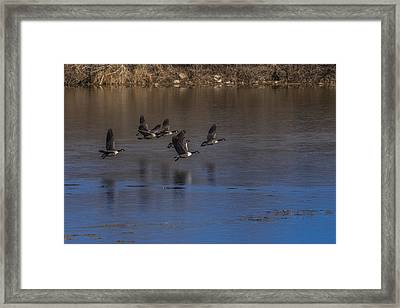 Flight Of The Geese Framed Print