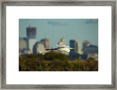 Flight Of The Great Egret Framed Print