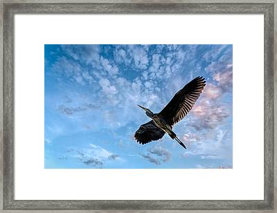 Flight Of The Heron Framed Print by Bob Orsillo