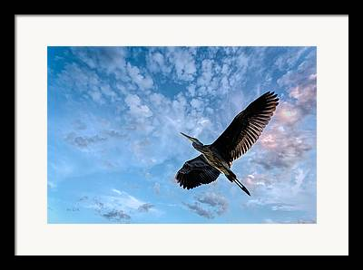 Birdwatching Framed Prints