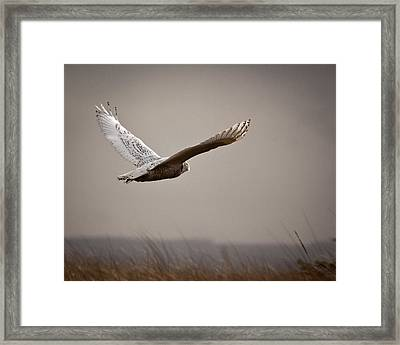 Framed Print featuring the photograph Flight Of The Snowy Owl by Erin Kohlenberg