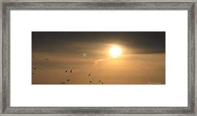 Flight Of The Sunset Framed Print by Debra Forand
