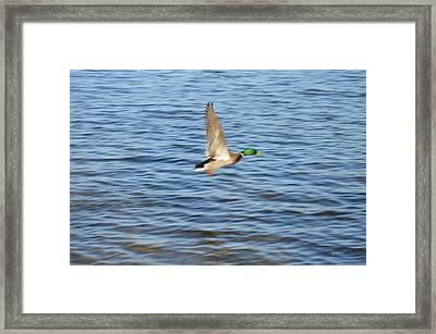 Flight On Waves Framed Print