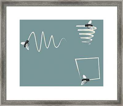 Flight Patterns Of A Fly Framed Print by Claus Lunau