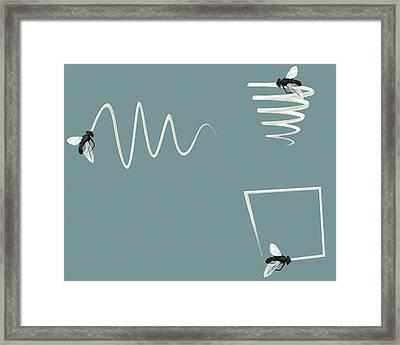 Flight Patterns Of A Fly Framed Print