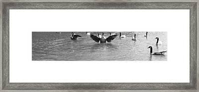 Flight Framed Print by Sarah E Kohara
