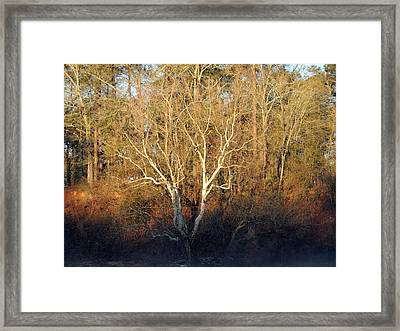 Flint River 16 Framed Print