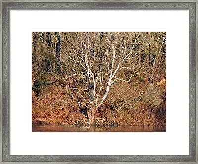 Flint River 25 Framed Print