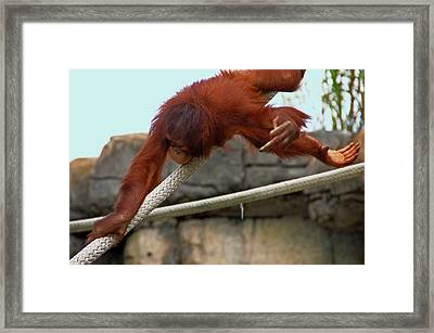 Flippin The Bird Framed Print by Aimee L Maher Photography and Art Visit ALMGallerydotcom