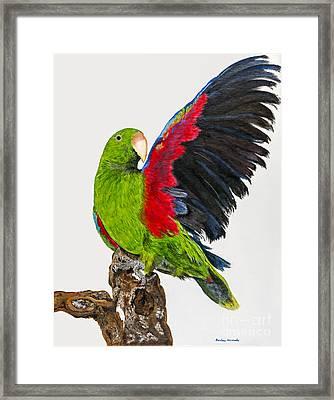 Flirting Parrot By Barbara Heinrichs Framed Print by Sheldon Kralstein
