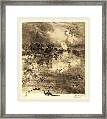 Félix Bracquemond French, 1833-1914, The Swallows Framed Print by Litz Collection