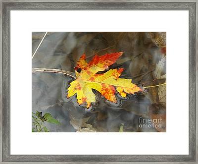 Floating Autumn Leaf Framed Print by Erick Schmidt