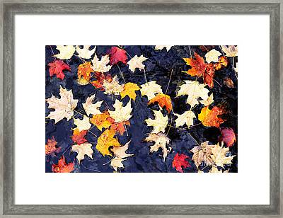 Floating Autumn Leaves  Framed Print by Thomas R Fletcher
