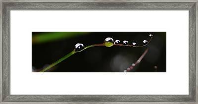 Floating Beauty Framed Print by Tara Miller