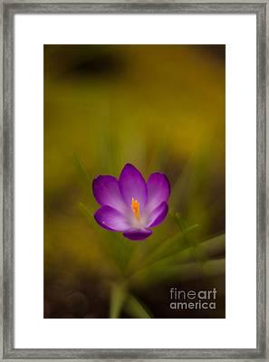 Floating Bloom Framed Print