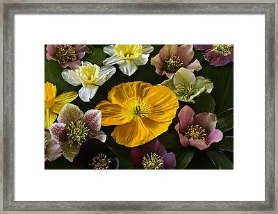 Floating Bouquet Of Early April Flowers Framed Print
