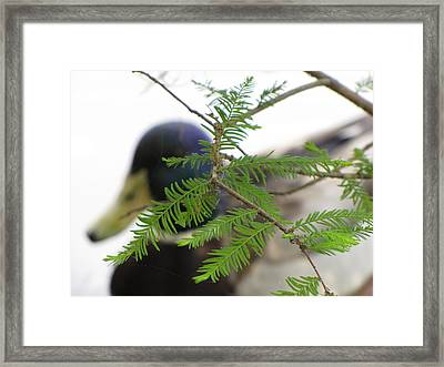 Framed Print featuring the photograph Floating By by Beth Vincent