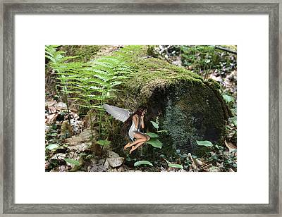 Floating Fairy In Forest Framed Print