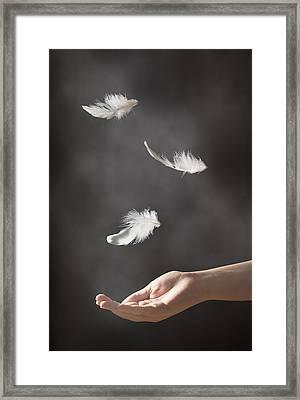 Floating Feathers Framed Print by Amanda Elwell