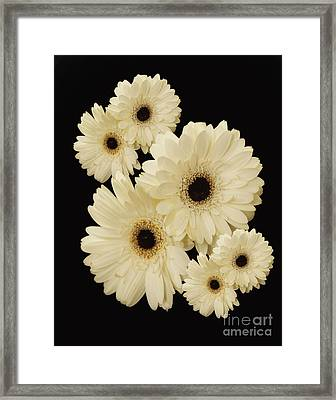 Floating Flowers Framed Print by Nancy Dempsey
