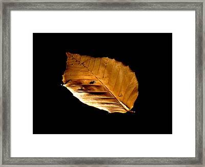 Floating Freely Framed Print by Stephen Melcher