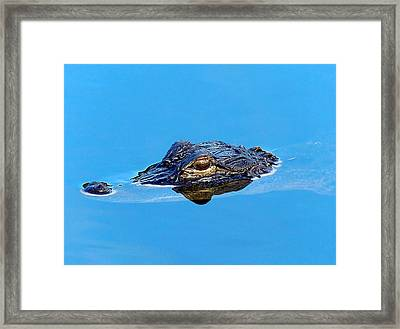 Framed Print featuring the photograph Floating Gator Eye by Chris Mercer