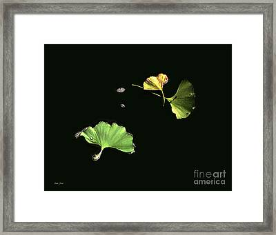 Floating Ginko Leaves Framed Print by Dale   Ford